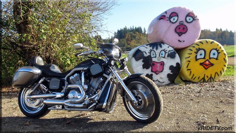 carbon fiber vrod pig cow chicken