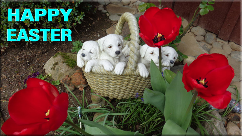 easter puppy and tulips