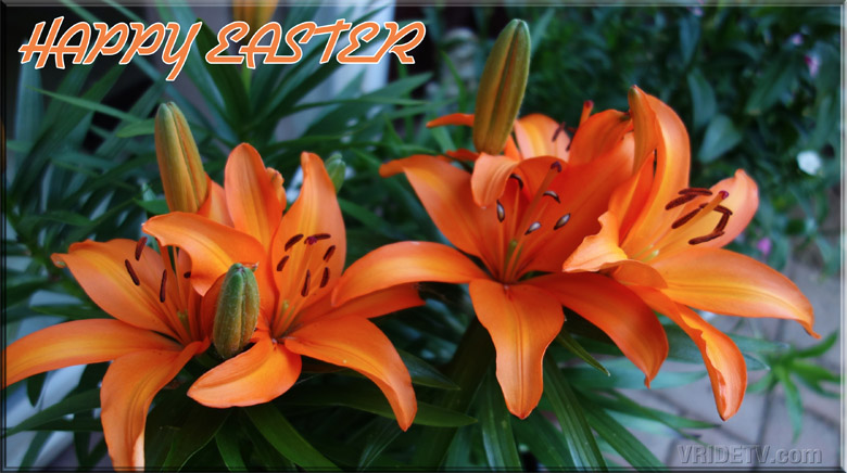 Happy Easter lilies