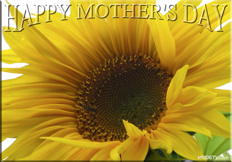 Happy Mothers Day Flower Motorcycle Rider Blog Behind The