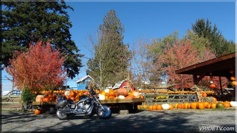 motorcycle pumpkins fall colours